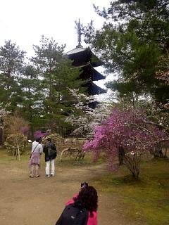 20150404仁和寺(その41)
