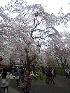 20150404平野神社(その8)