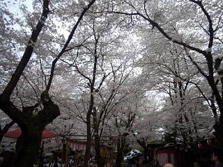 20150404平野神社(その9)