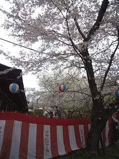20150404平野神社(その14)