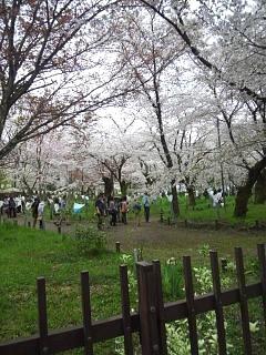 20150404平野神社(その16)