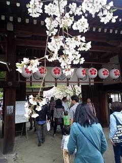 20150404平野神社(その17)
