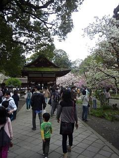 20150404平野神社(その18)