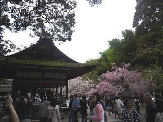 20150404平野神社(その19)