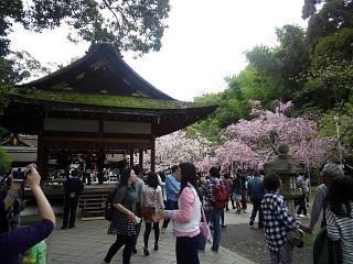 20150404平野神社(その20)