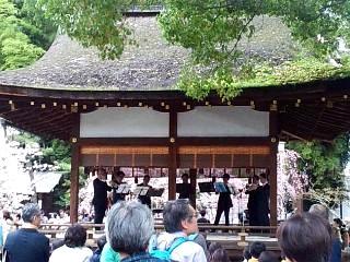 20150404平野神社(その31)