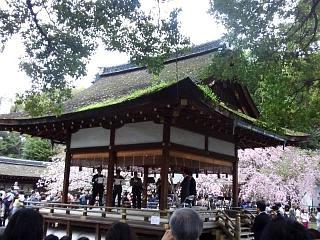 20150404平野神社(その34)