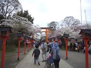 20150404平野神社(その36)