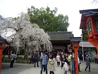 20150404平野神社(その37)