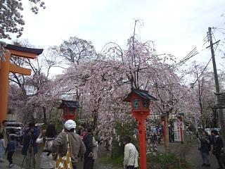 20150404平野神社(その38)