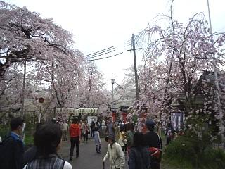 20150404平野神社(その39)