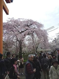 20150404平野神社(その40)