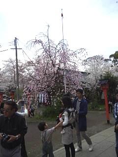 20150404平野神社(その41)
