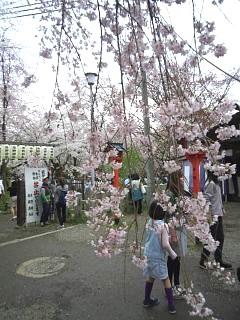 20150404平野神社(その42)