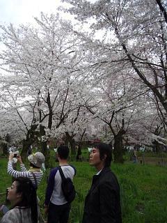20150404平野神社(その45)