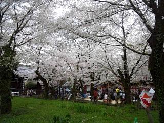 20150404平野神社(その55)