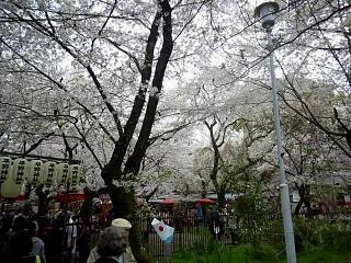 20150404平野神社(その56)