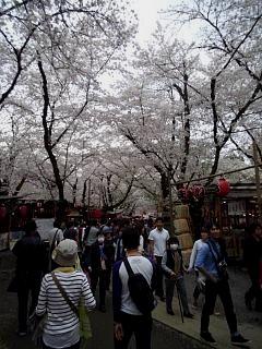 20150404平野神社(その58)