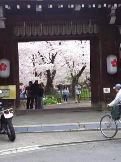 20150404平野神社(その60)