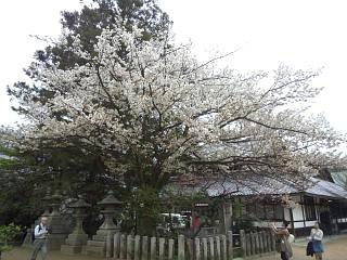 20150404北野天満宮(その10)