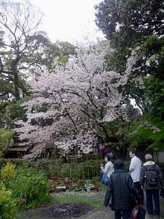 20150405京都御所(その3)