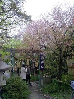 20150405京都御所(その5)