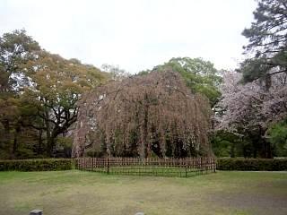 20150405京都御所(その6)