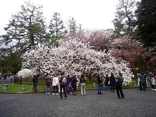 20150405京都御所(その14)