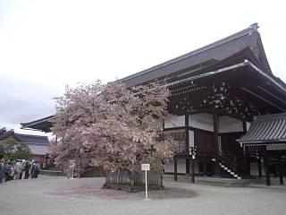20150405京都御所(その30)
