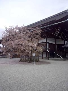 20150405京都御所(その31)