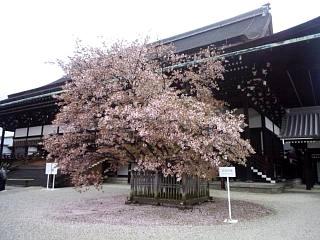 20150405京都御所(その32)