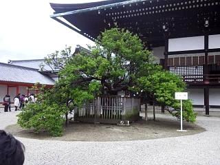 20150405京都御所(その36)