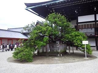 20150405京都御所(その37)