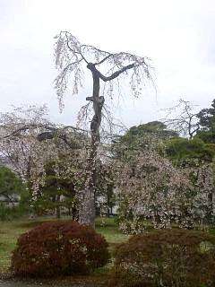 20150405京都御所(その50)