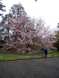 20150405京都御所(その51)