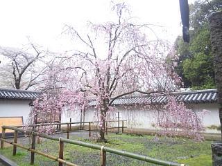 20150405醍醐寺(その3)