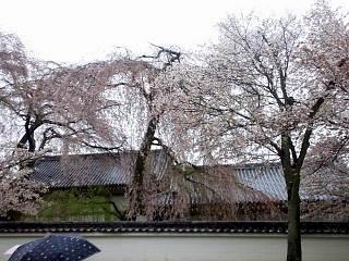 20150405醍醐寺(その8)