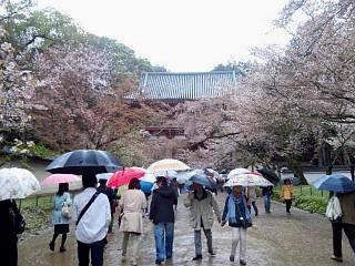 20150405醍醐寺(その9)
