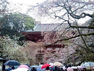 20150405醍醐寺(その10)