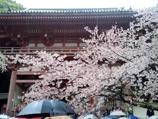 20150405醍醐寺(その11)
