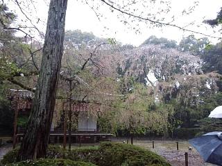 20150405醍醐寺(その16)