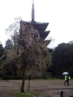 20150405醍醐寺(その17)