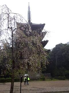 20150405醍醐寺(その18)