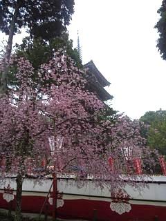 20150405醍醐寺(その20)