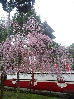 20150405醍醐寺(その21)