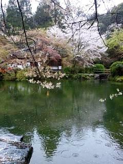20150405醍醐寺(その29)
