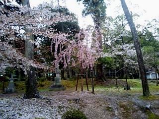 20150405醍醐寺(その34)