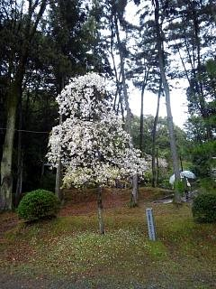 20150405醍醐寺(その37)