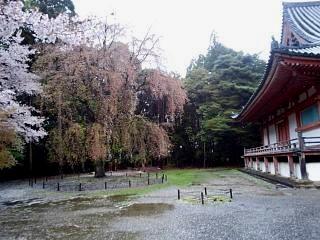 20150405醍醐寺(その41)