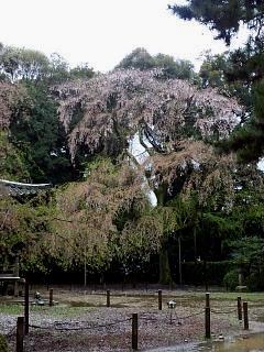 20150405醍醐寺(その42)